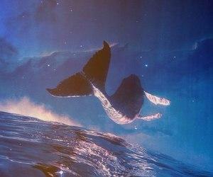 whale, sea, and sky image