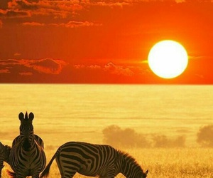 zebra, africa, and sunset image