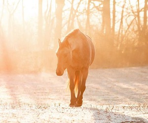 equestrian, horses, and nature image