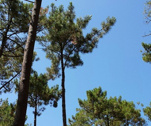 france, sky, and tree image