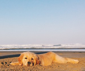 dog, beach, and cute image