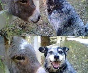 funny, dog, and donkey image
