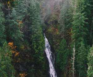 nature, fall, and forest image