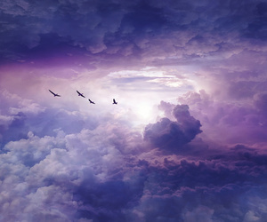 birds, clouds, and Dream image