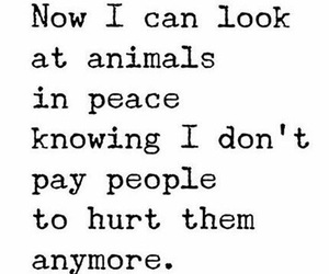 animals, hurt, and peace image