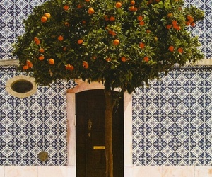 tree, orange, and portugal image