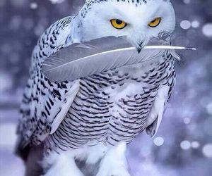 owl, animal, and snow image