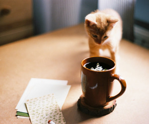 cat, vintage, and coffee image