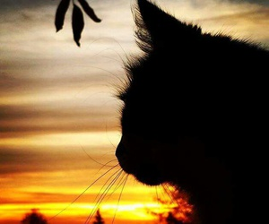 cat, photography, and sunset image