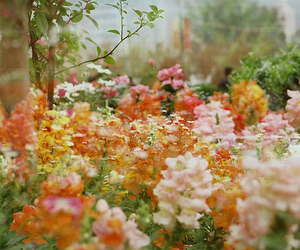 flowers, photography, and pretty image