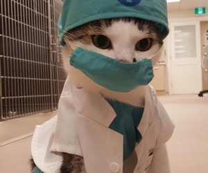 cat and doctor image