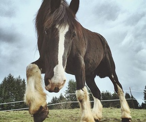 horse, animals, and sweet image