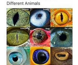 eye, eyes, and internet image