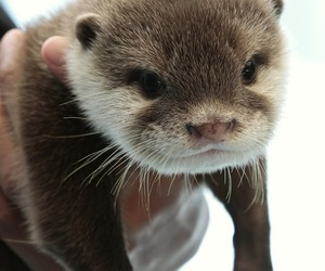 animal and otter image