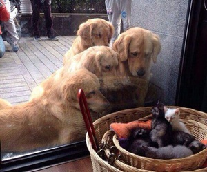 funny, dogs, and kitten image