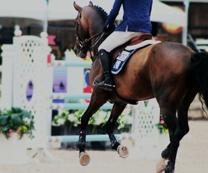 cheval, competition, and equestrian image