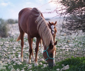 animal and horse image