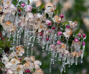 flowers, frozen, and nature image
