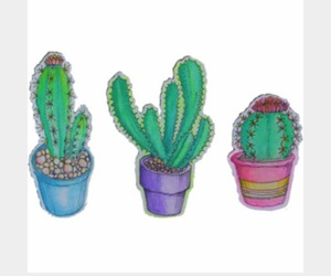 cactus and cactus drawing image