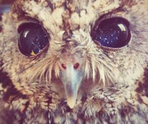 birds, owl, and zevs image