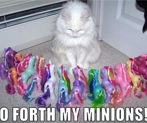 cat, funny, and my little pony image