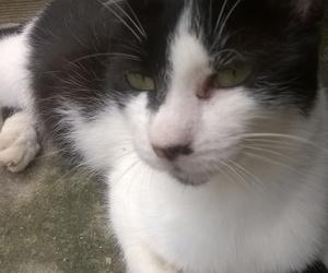 blackandwhite, pretty, and cat image