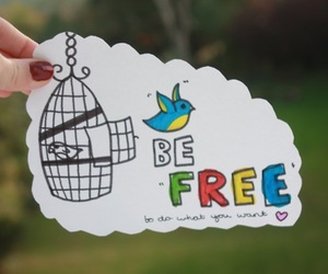 bird, be free, and photography image