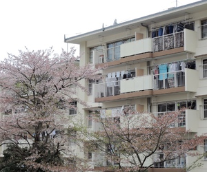 theme, japan, and sakura image