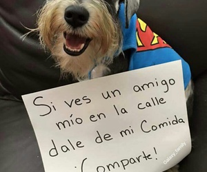 adopt, amigos, and Animales image