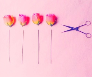 cut, flowers, and pink image