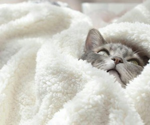 cat, animal, and blanket image