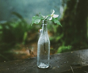 nature and rain image