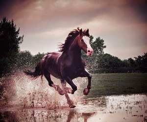 beauty, equestrian, and horses image