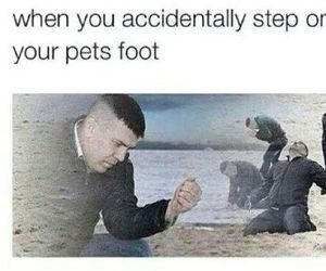 funny, pet, and lol image