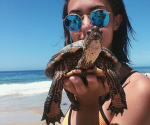 cool, turtle, and wild image