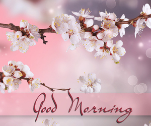 blossoms, good morning, and greetings image