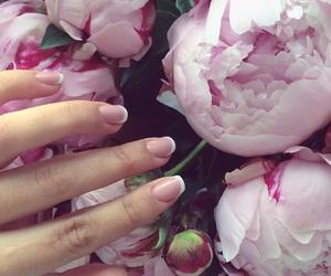 glamorous, peonies, and pink image