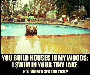 bear, funny, and pool image