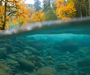 nature, water, and autumn image