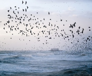 bird, sea, and sky image