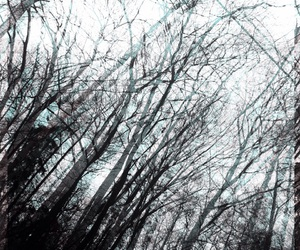 blurred, branch, and effect image