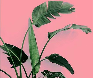 plants, pink, and aesthetic image