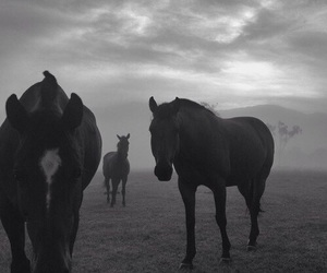 horse, animals, and black and white image