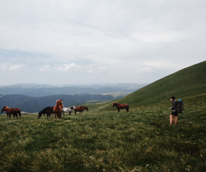horse, mountains, and nature image