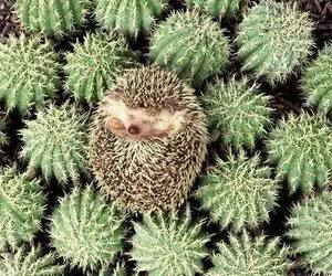 hedgehog, cute, and cactus image
