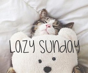cat, funny, and Lazy image
