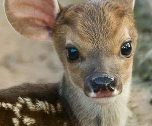 animal, cute, and deer image