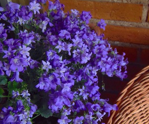 flowers, happines, and home image