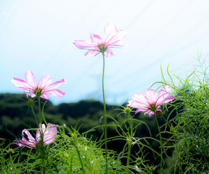 2012, flower, and japan image