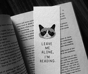 book, reading, and grumpy cat image